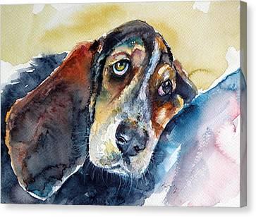 Besset Hound Canvas Print by Kovacs Anna Brigitta