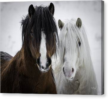 Best Friends II Canvas Print by Everet Regal