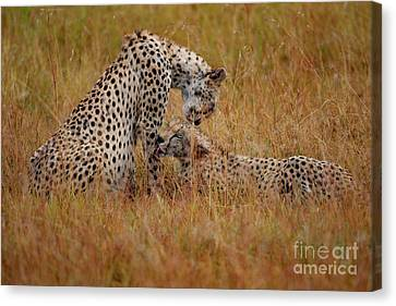 Best Of Friends Canvas Print by Stephen Smith