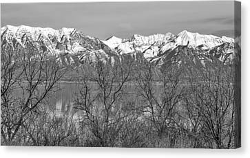 Between The Trees Canvas Print by David Millenheft