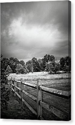 Between Two Neighbors Canvas Print by Trish Tritz