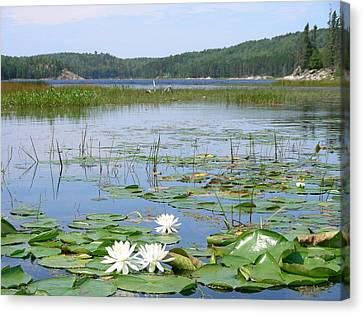 Beyond The Lilly Pads Canvas Print by Peter  McIntosh