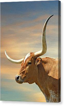 Big Horns Canvas Print by Robert Anschutz