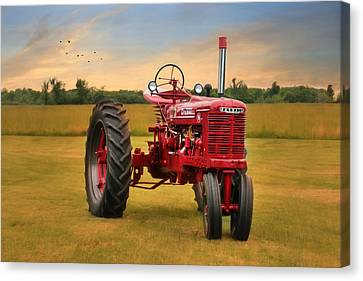 Big Red - Farmall Tractor Canvas Print by Lori Deiter