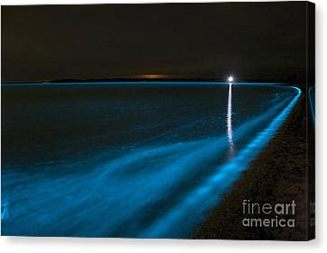 Bioluminescence In Waves Canvas Print by Philip Hart