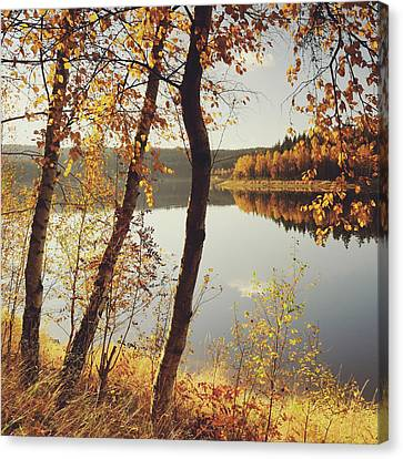 Birch Trees And Reflected Autumn Colors Canvas Print by Stefan Mendelsohn