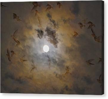 Bird Dreams Canvas Print by Sue McGlothlin