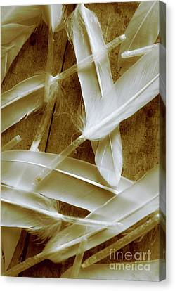 Bird-less Of A Feather Canvas Print by Jorgo Photography - Wall Art Gallery