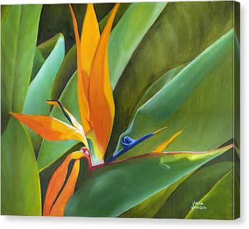 Bird Of Paradise Canvas Print by Adam Johnson