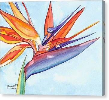 Bird Of Paradise IIi Canvas Print by Marionette Taboniar