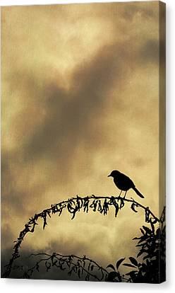 Bird On Branch Montage Canvas Print by Dave Gordon