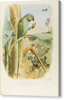 Birds Most Remarkable Their Forms And Colors Canvas Print by Edouard Travies