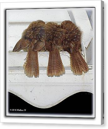 Birds Of A Feather Canvas Print by Brian Wallace