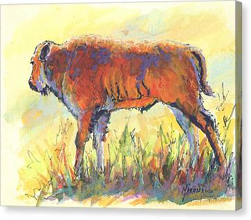 Bison Calf Canvas Print by Marion Rose