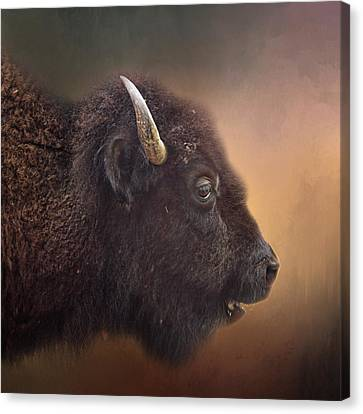 Bison Canvas Print by David and Carol Kelly