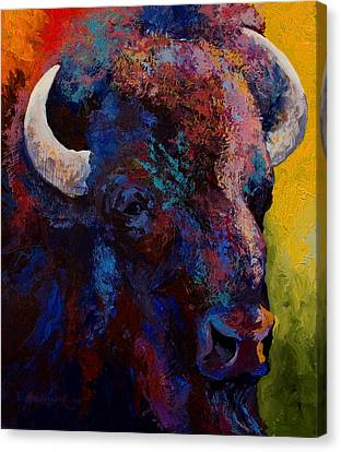 Bison Head Study Canvas Print by Marion Rose