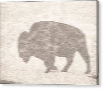 Bison Memory Canvas Print by Anthony Robinson