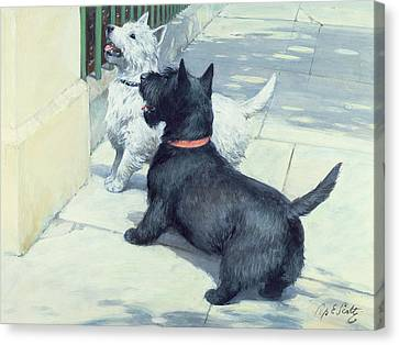 Black And White Dogs Canvas Print by Septimus Edwin Scott