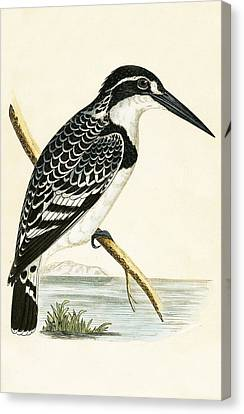 Black And White Kingfisher Canvas Print by English School