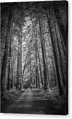 Black And White Of A Road In A Vancouver Island Rain Forest Canvas Print by Randall Nyhof