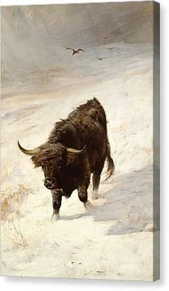 Black Beast Wanderer  Canvas Print by Joseph Denovan Adam