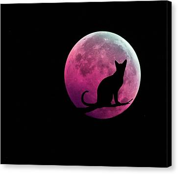 Black Cat And Pink Full Moon Canvas Print by Marianna Mills
