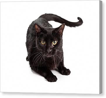 Black Cat Laying Looking At Camera Canvas Print by Susan  Schmitz