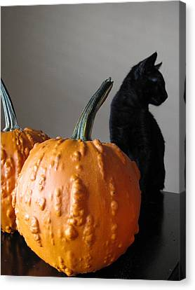 Black Cat Silhouette  Canvas Print by Lindie Racz