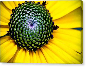 Black Eyed Susan Goldsturm Flower Canvas Print by Ryan Kelly