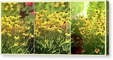 Black Eyed Susans Triptych Canvas Print by Theresa Campbell
