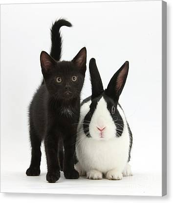 Black Kitten And Dutch Rabbit Canvas Print by Mark Taylor