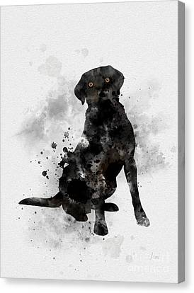 Black Labrador Canvas Print by Rebecca Jenkins