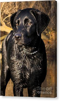 Black Labrador Retriever Dog Canvas Print by Cathy  Beharriell