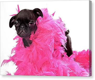 Black Pug Puppy With Pink Boa Canvas Print by Susan Schmitz