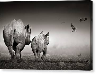 Black Rhino Cow With Calf  Canvas Print by Johan Swanepoel