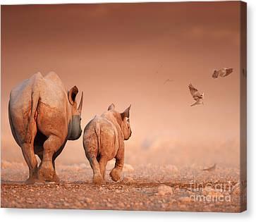 Black Rhino's Canvas Print by Johan Swanepoel
