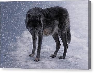 Black She-wolf Canvas Print by Joachim G Pinkawa