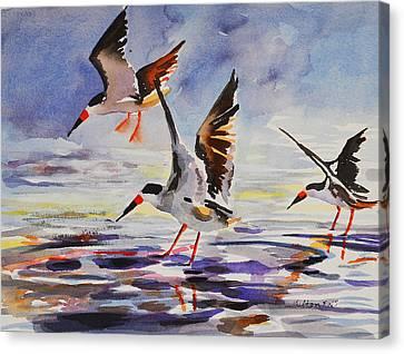 Black Skimmers 2-18-16 Canvas Print by Julianne Felton
