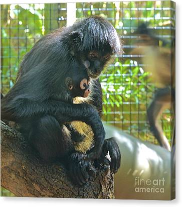 Black Spider Monkey And Baby Canvas Print by AnnaJo Vahle