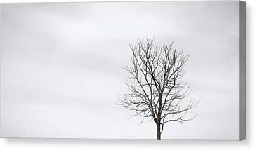 Black Tree White Sky Canvas Print by Scott Norris