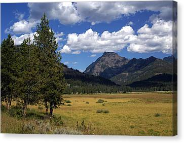 Blacktail Plateau Canvas Print by Marty Koch