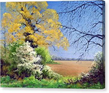 Blackthorn Winter Canvas Print by Anthony Rule