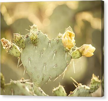 Blooming Prickly Pear Cactus Canvas Print by Juli Scalzi