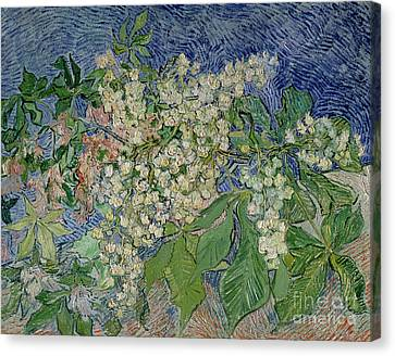 Blossoming Chestnut Branches Canvas Print by Vincent Van Gogh