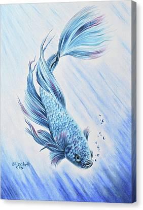 Blue Betta Canvas Print by Elizabeth Cox