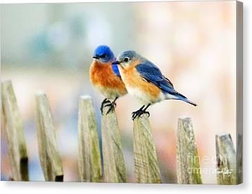 Blue Birds Canvas Print by Scott Pellegrin