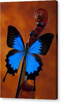 Blue Butterfly On Violin Canvas Print by Garry Gay