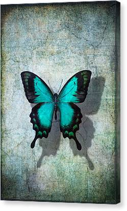 Blue Butterfly Resting Canvas Print by Garry Gay