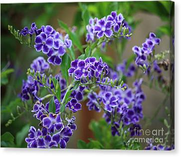 Blue Cottage Flowers Canvas Print by Carol Groenen