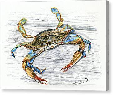 Blue Crab Canvas Print by Jana Goode